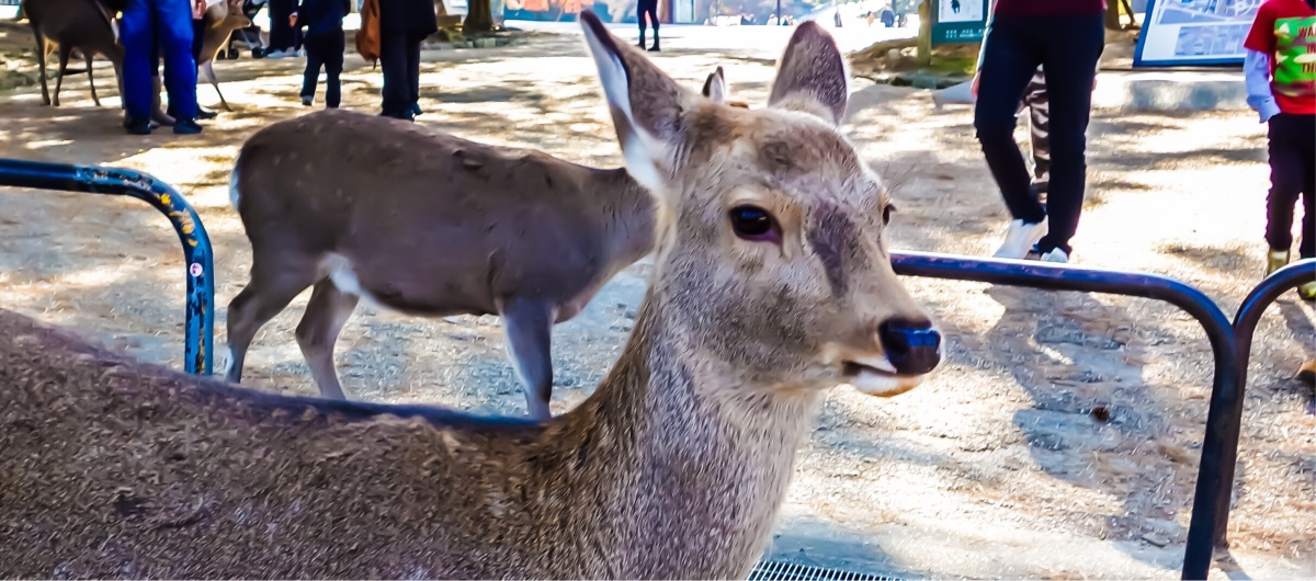 A Day Trip To Nara From Osaka » Goldilocks Lifestyle Travel